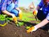 Esonero triennale e riduzioni contributive nel settore agricolo